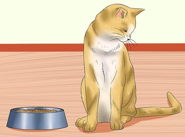 aid2050777-v4-728px-Ensure-That-Your-Cat-Finishes-Its-Food-Step-9