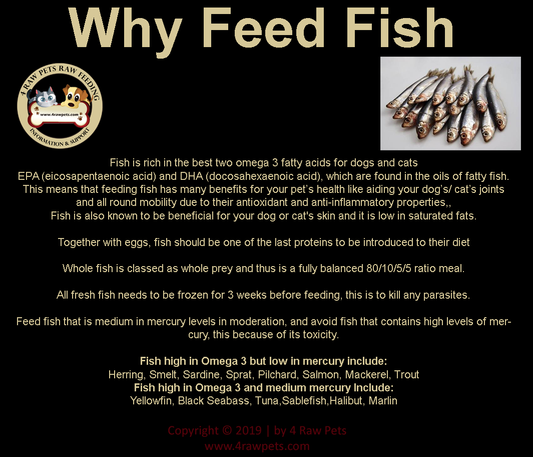 Why feed fish