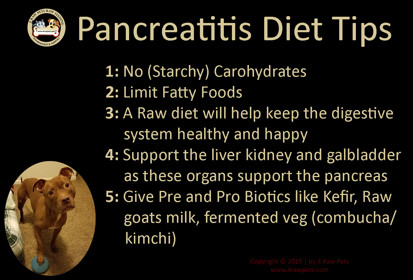raw diet for dogs with pancreatitis